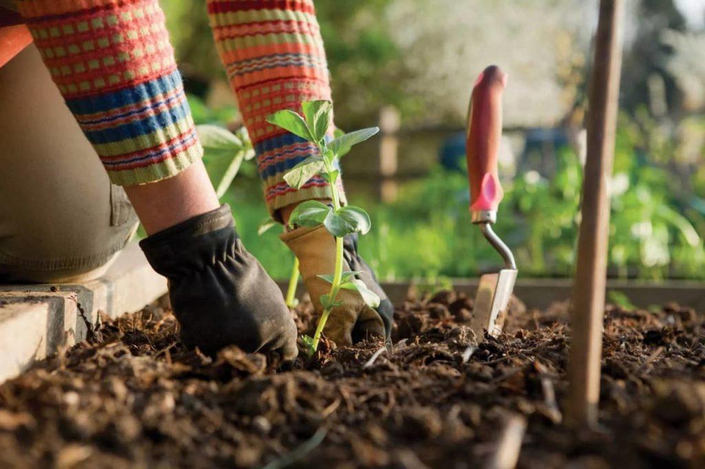 Что сажать в апреле в открытый грунт и на рассаду в 2021 году?