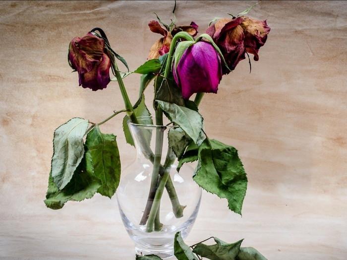 розы завяли в вазе
