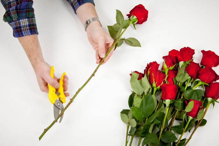 обрезка стебля розы
