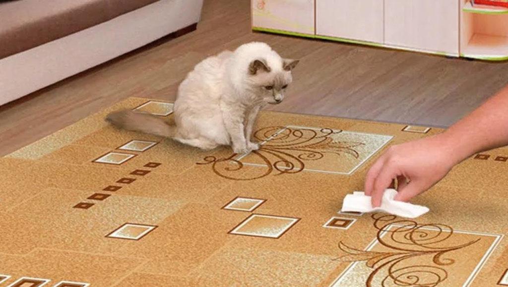 запах кошки в квартире