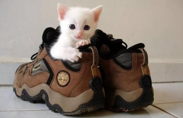 кошачий запах трудно удаляется